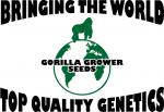 Logo Gorrilla Grower Seeds