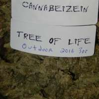 Pic for Tree of Life (Cannabeizein)