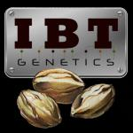 Logo IBT Genetics Seeds