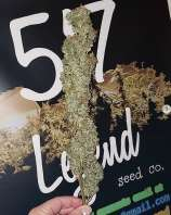 517 Legend Seed Co Fuck Face