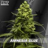 BSF Seeds Amnesia Glue