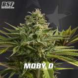 Moby-D