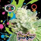 Big Buddha Seeds Head Cheese