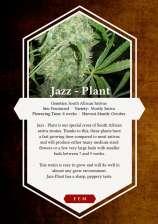 Jazz Plant