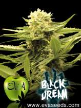 Black Dream