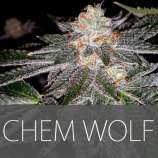 Exclusive Seeds Chem Wolf
