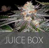 Exclusive Seeds Juice Box