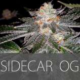 Exclusive Seeds Sidecar OG
