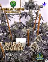 Exotic Genetix Milk & Cookies