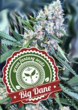 Green Fantasy Seeds Big Dane Auto