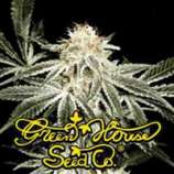 Green House Seeds White Widow
