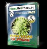 Hempbrothers Transformed Face