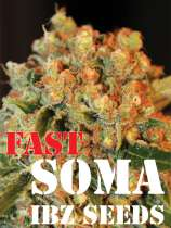 IBZ Seeds Fast Soma
