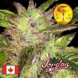 Jordan of the Islands God Bud
