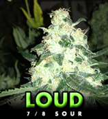 Loud Seeds 7/8 Sour