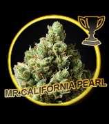 Mr. California Pearl