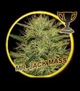 Mr. Jack Mass