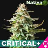 Nativa Seeds Critical+