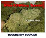 New420Guy Seeds Blueberry Cookies