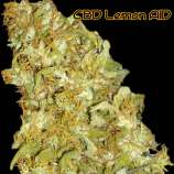Original Sensible Seeds CBD Lemon AID
