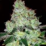 Girl Scout Cookies