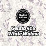Gelato 41 x White Widow