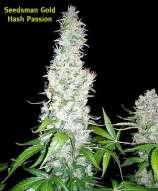 Hash Passion