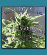 SnowHigh Seeds Black Congolese IX