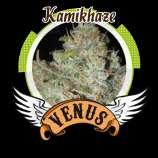 Kamikhaze
