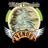 Venus Genetics White Chocolate
