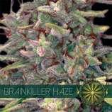 Brainkiller Haze