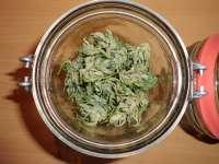 Green Rasta (Imagen de Azaghl..)