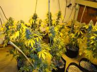 Imagen de New420Guy (Blackberry Diesel)