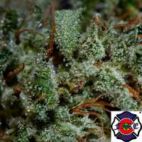 The Fire Department 303 Headband - foto de triceratopsgardens