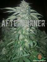 Third Eye Genetics Afterburner - foto de ThirdEyeGenetics