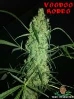 Third Eye Genetics Voodoo Rodeo - foto de ThirdEyeGenetics